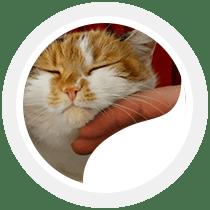 soins des animaux 85